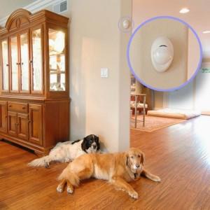 Antifurto casa con cane - Miglior allarme casa ...